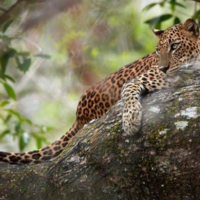 Top Five Wildlife Experiences in Sri Lanka