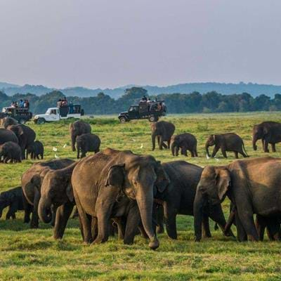 A Sri Lanka Wildlife Holiday