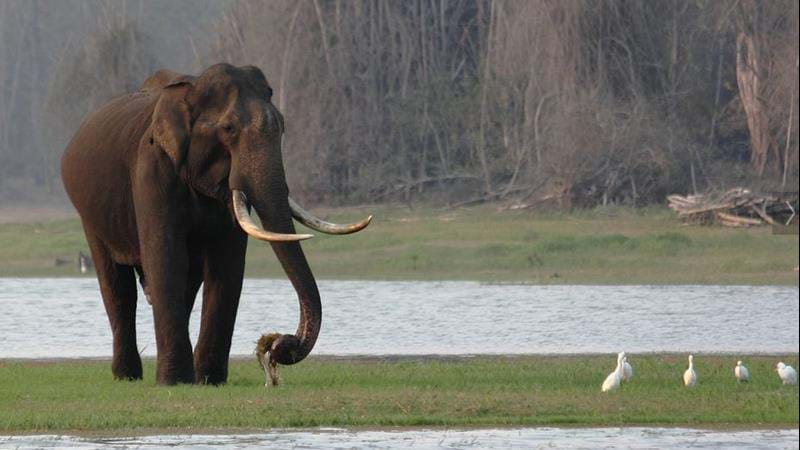 Wildlife holiday in Kerala, India