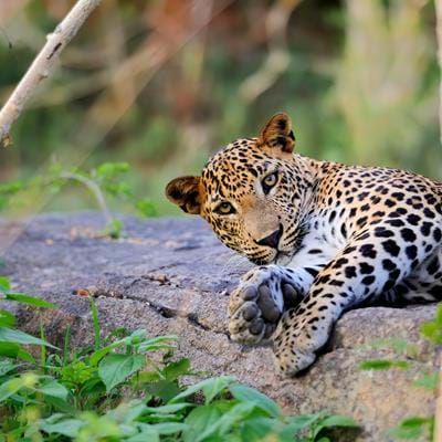 In Search of Sri Lanka's Big Five