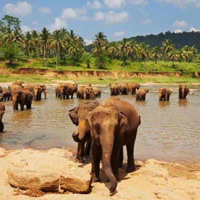 The Best National Parks in Sri Lanka for Wildlife