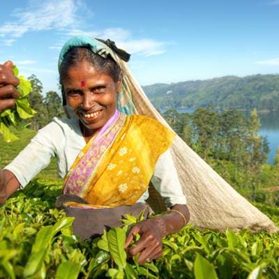 Tea tasting tips for Sri Lanka